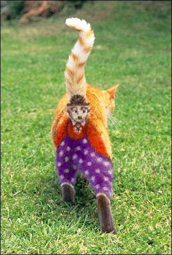 cat-ass-clown.jpg