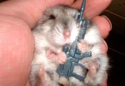 dead-hamster.jpg