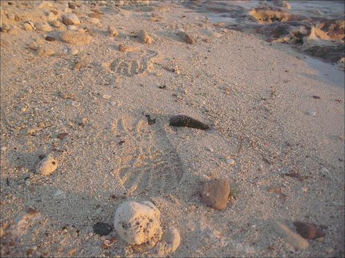 footprints-in-sand.jpg