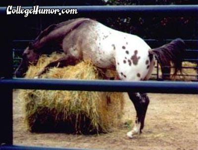 horse-masturbating.jpg