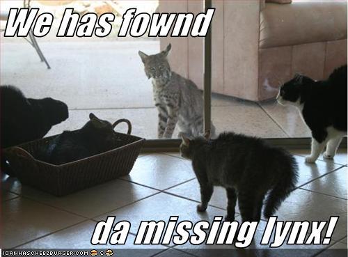 missing-lynx.jpg