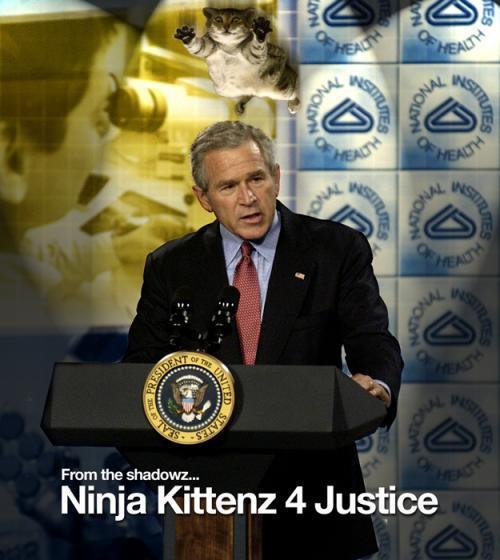 Ninja Kittenz 4 Justice!