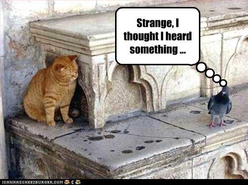 strange-i-heard-something.jpg